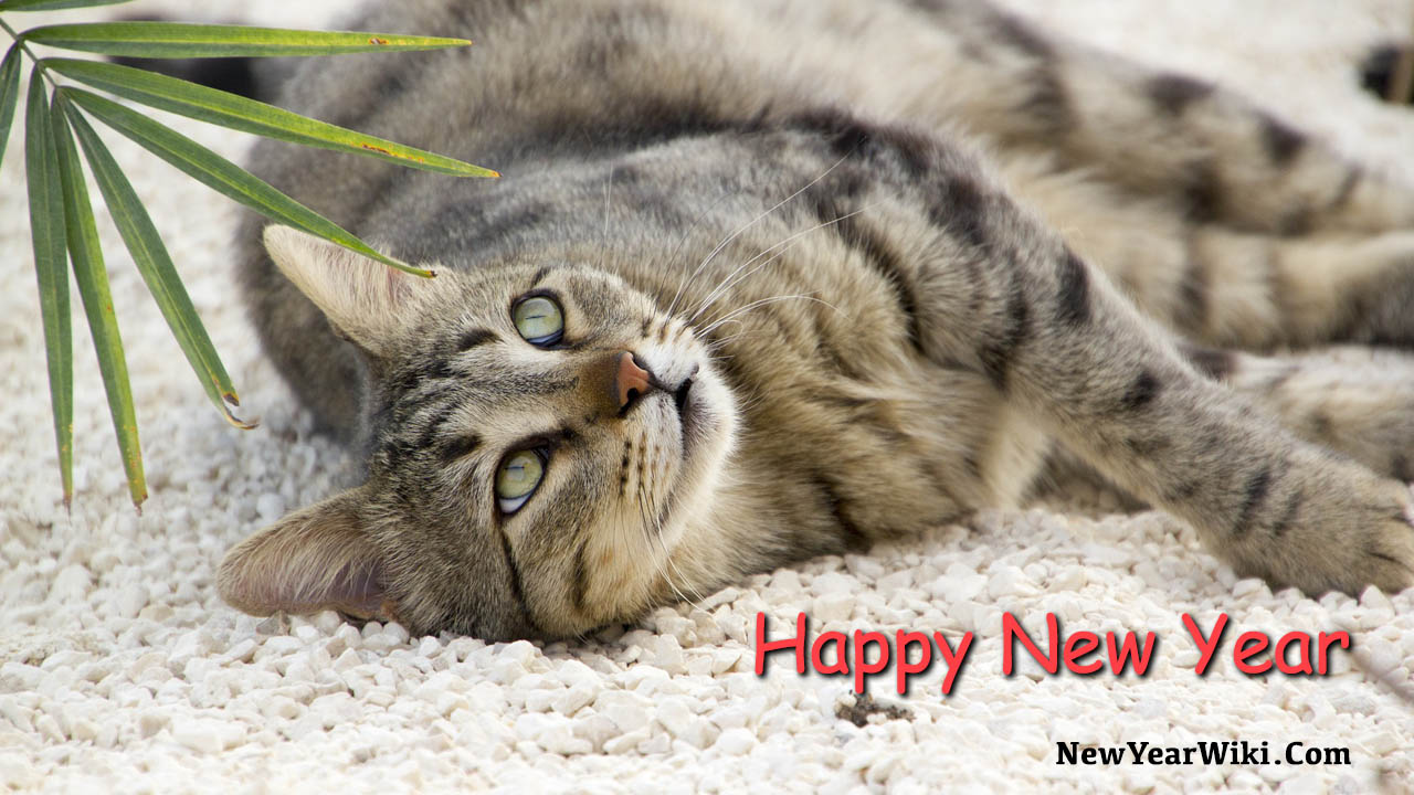 Happy New Year Cat Photos