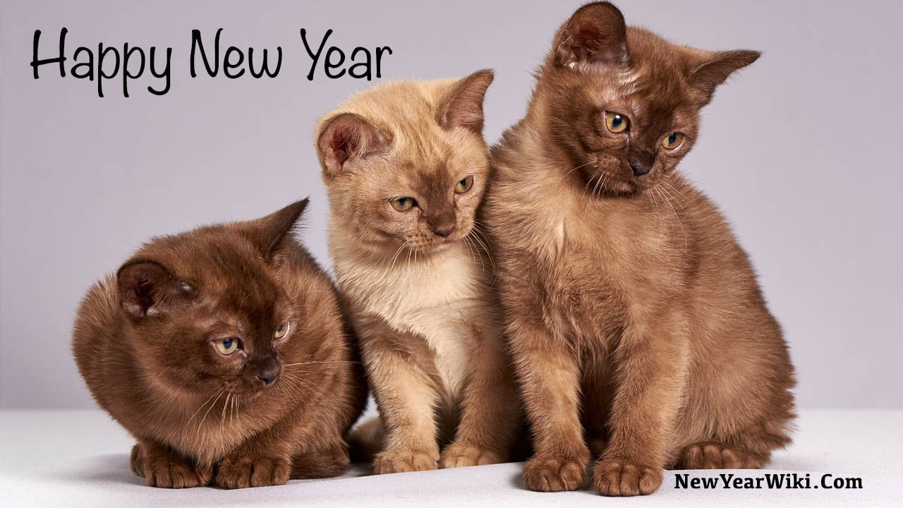 Happy New Year Kitten Photos