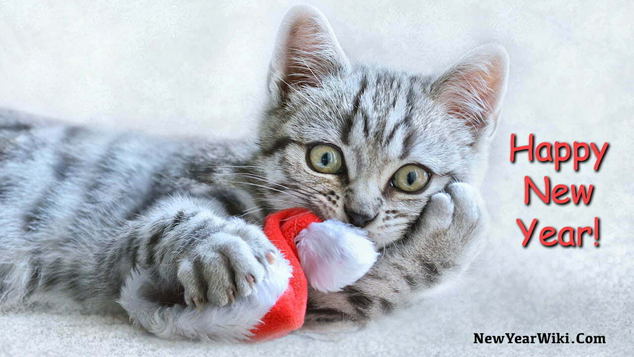 New Year Kitten Images