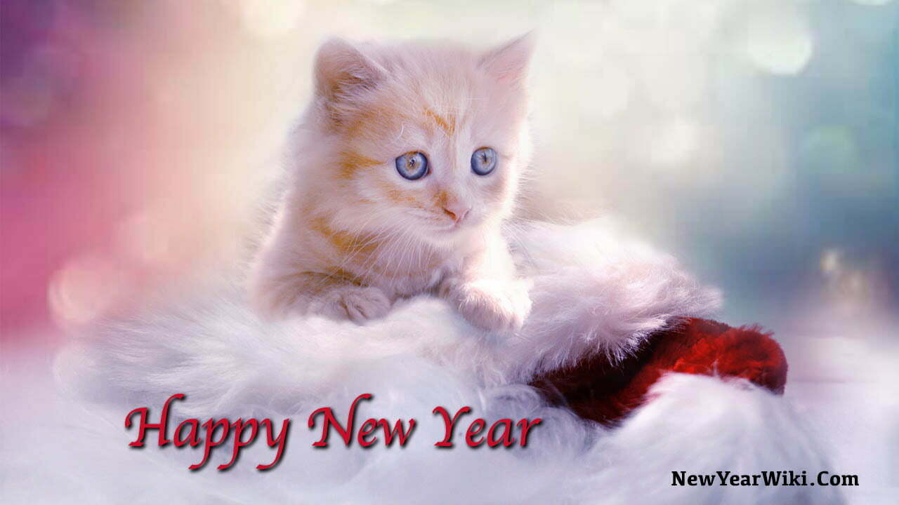 New Year Kitten Photos