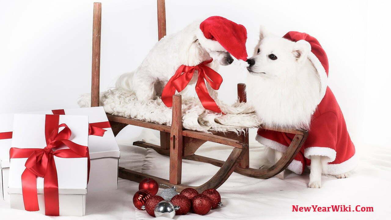 Dog Christmas Pajamas